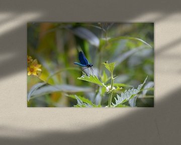 Blauwe libelle te Kroatië van Lisanne Wouters