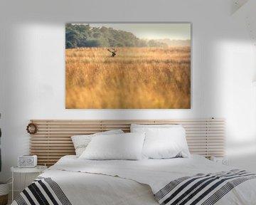 Rothirsch im hohen Gras von Ton Drijfhamer
