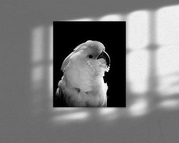 Die Kakadus von Hennie Zeij