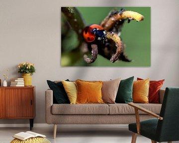Ein Makroporträt eines Marienkäfers, der an der Spitze eines Zweigs in einer verwelkten Blume sitzt. von Joeri Mostmans