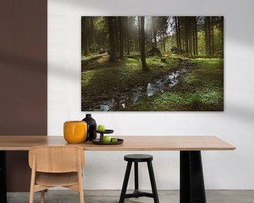 in het bos van Dieter Beselt