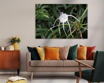 Witte bloem van Manon