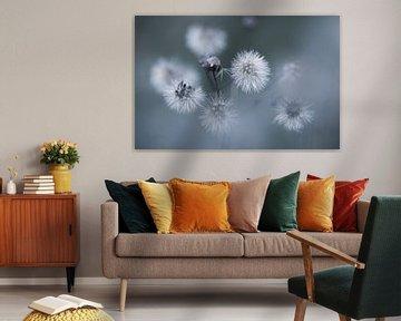 St. Jakobs-Pflanzenflaum von KB Design & Photography (Karen Brouwer)