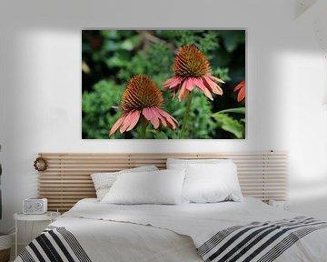 Sonnenhut oder Echinacea von Pim van der Horst