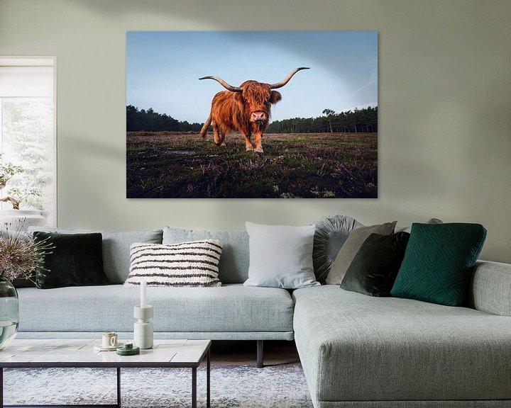 Sfeerimpressie: Schotse hooglander op de Wezepsche heide | Wezep vlakbij Zwolle  | Wildlife van Marijn Alons