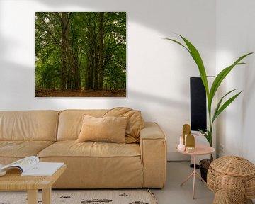 Lange bomenpad van Arno van der Poel