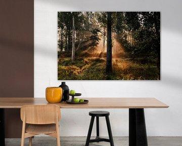 Zonsopgang in het Leeuwarder Bos van Nando Foto