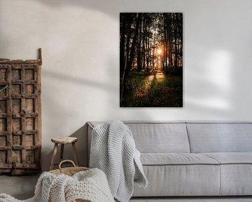 Warm zonlicht in het Leeuwarder Bos van Nando Foto