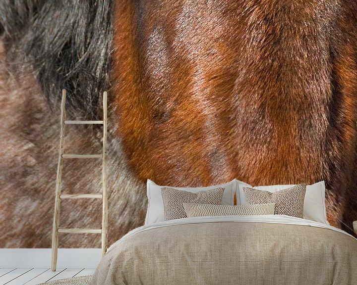 Beispiel fototapete: Portret of a horse von Brenda Gonzalez