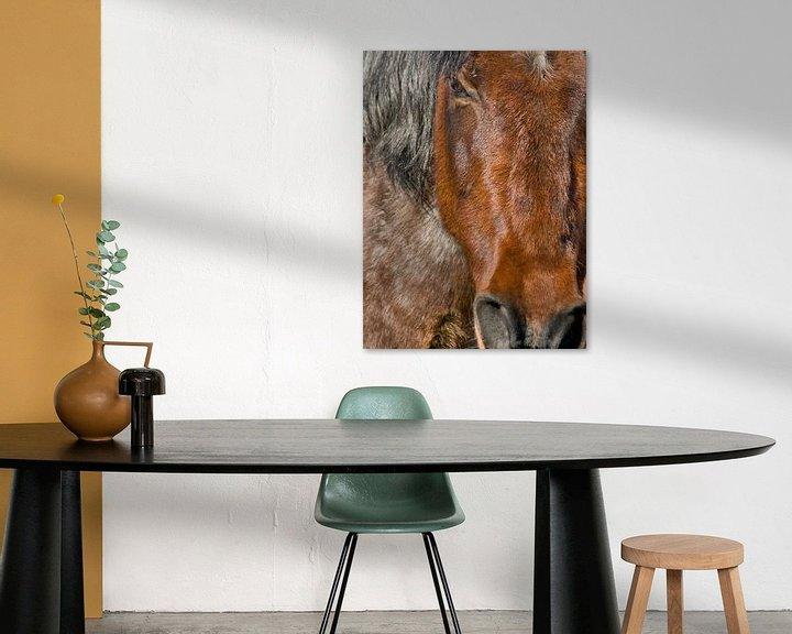 Beispiel: Portret of a horse von Brenda Gonzalez