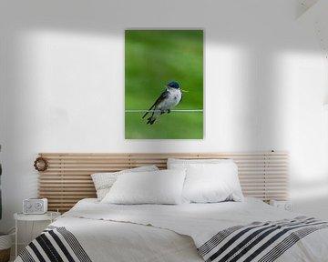 Blauw-witte zwaluw met takje von Brenda Gonzalez