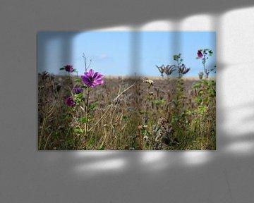 Zwischen den getrockneten Blumen von FotoGraaG Hanneke