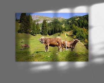 Koeien in alpenweide van Johan Vanbockryck