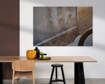 la toile d'araignée dorée sur wil spijker