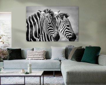 Zebras BW von astrid buys