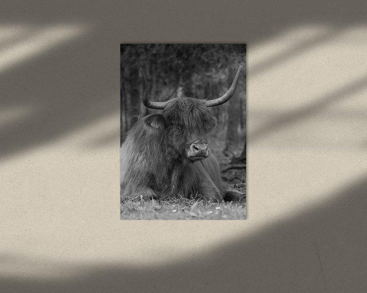 Sfeerimpressie: Schotse hooglander liggend in het bos van Michel Knikker