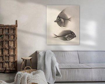 Fish van David Potter