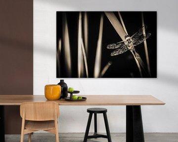 Libelle von Helga van de Kar