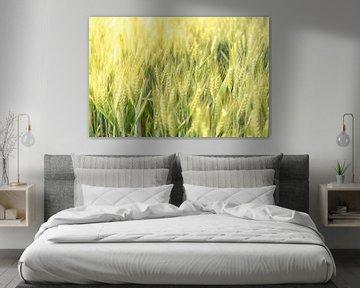 Plants de blé frais poussant dans un champ au printemps sur Sjoerd van der Wal