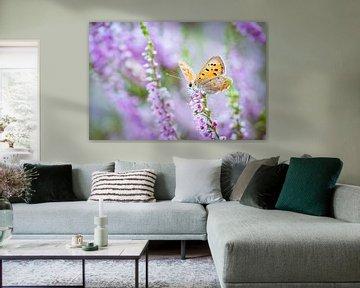 Vrouwelijk heideblauwtje vlinder op paarse heide van Fotografiecor .nl