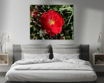 rote Rose von Wim vd Neut