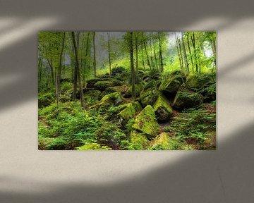 Rotsen in het bos van Thomas Herzog