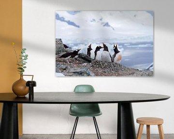 Pinguïns op Antarctica van Angelika Stern
