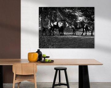 Exmoor-Pferde in den Wäldern von Moniek van Rijbroek