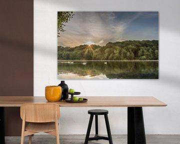 Schwäne bei Sonnenaufgang im Cranenweyer von John van de Gazelle