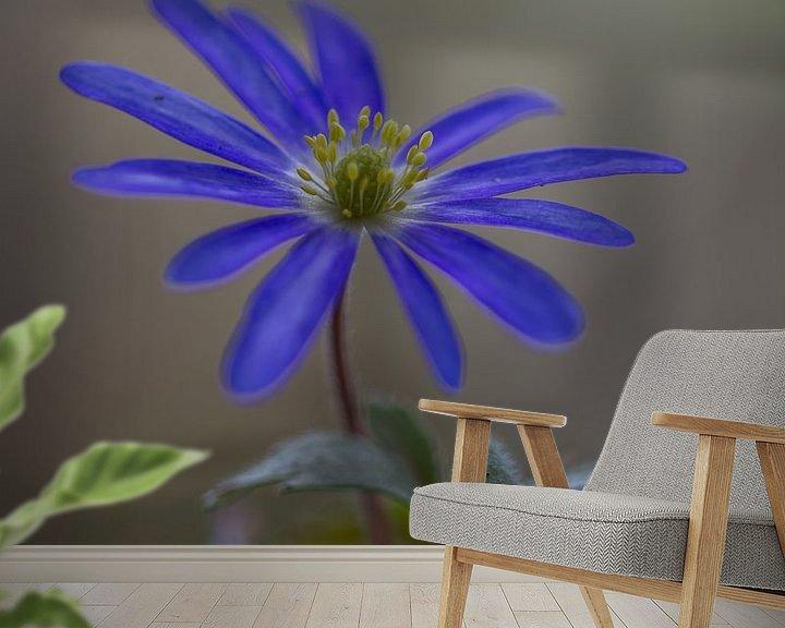 Beispiel fototapete: Anemone blanda, blaue Anemone von John van de Gazelle