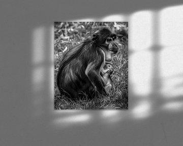 Mutter Weißhaubenmango und ihr Baby von Michelle van den Boom