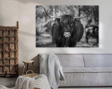 Schotse hooglander zwart wit van Sasja van der Grinten
