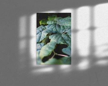 Blättertraum von Nadine Rall