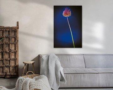 Stilleven bloem van Ineke Huizing
