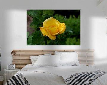 beauty in yellow  von michel voortman