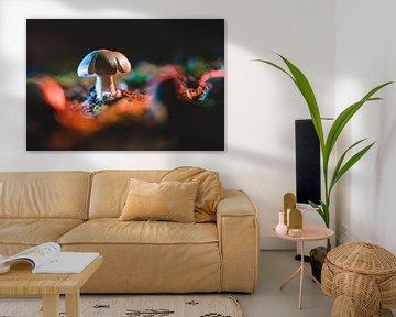 Kleiner Pilz auf Waldboden in farbigem Licht von Fotografiecor .nl