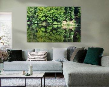 Spiegelung Wald von Susanne Seidel
