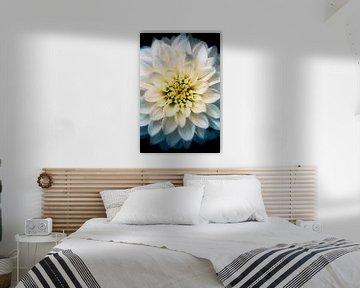 Die Blume der Dahlie von Jeroen Mondria