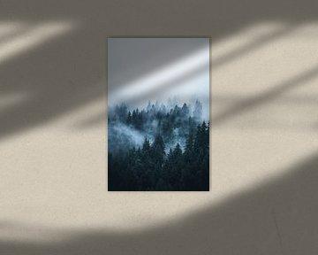 Mist door het bos in Dolomieten van Dylan Shu
