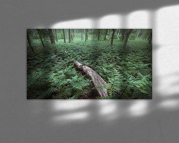 Zee van varens in het bos van Henno Drop
