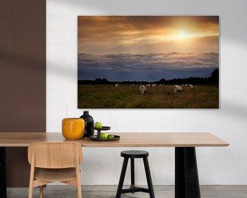 Koeien tijdens zonsondergang van Evita Medendorp