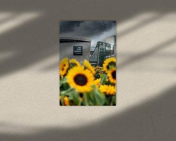 Van Gogh museum achter Zonnebloemenveld
