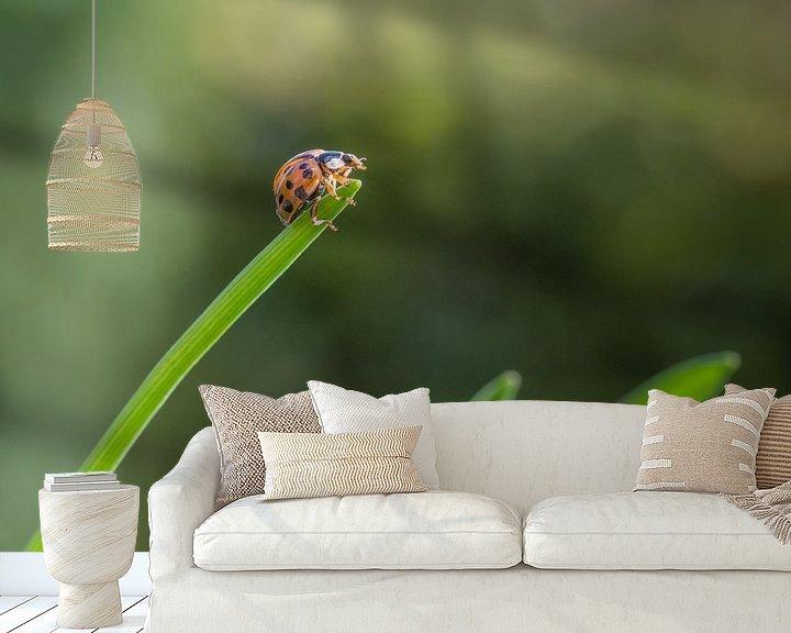 Sfeerimpressie behang: Lieveheersbeestje - kapoentje van Moetwil en van Dijk - Fotografie