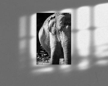 Elefant schwarz-weiß von Daphne Brouwer