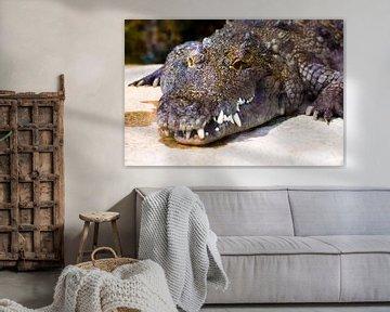 alligator /krokodil kleur van Daphne Brouwer