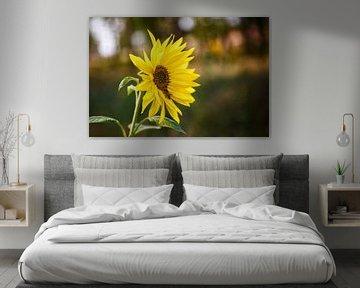 Sonnenblume Richtung Süden von Lukas Kalkhoff