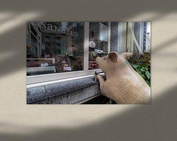 DURBUY Schwein für Metzgerei von Paul Veen