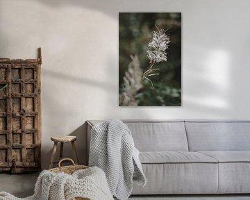Fertige Blume von Evita Medendorp