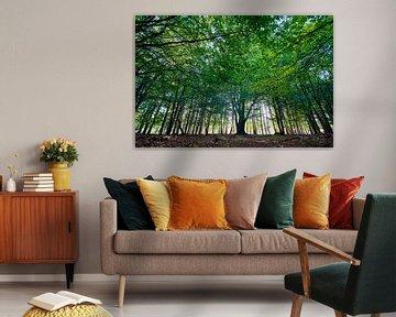 Veluwe bos op de start van de herfst van Glenn Vlekke