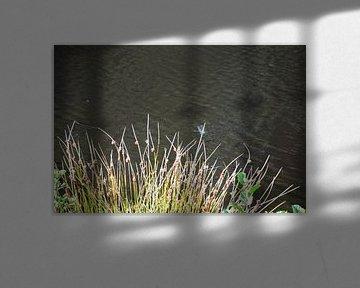 Libellen von Susanne Seidel